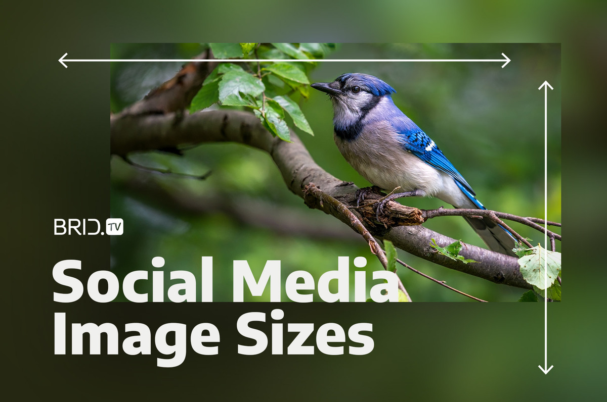 Social Media Image Sizes: Your Guide to the Right Dimensions